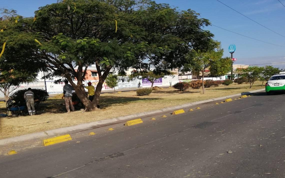 Retiran maleza seca en varias colonias - El Sol de Salamanca